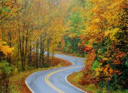 Autumn Curves 1