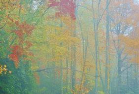 Autumn's Palate 1