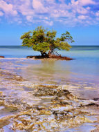Anne's Beach Mangrove 1
