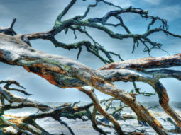The Driftwood Sea 1