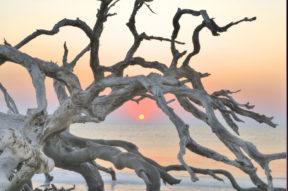 Sunrise Sentinel 1