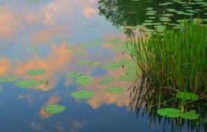 In Honor Of Monet 1