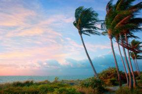 Breezy Palms 1