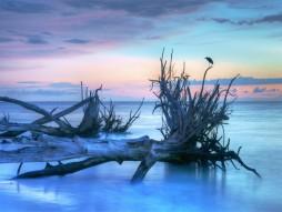 Seabird Sunset 1