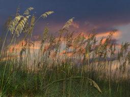 Sea Oats Sunset 1