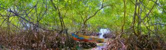 Mangrove Express