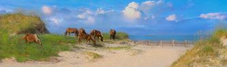 The Wild Horses of Corolla