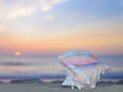 Purchase large format photos on canvas, such as Queen Conch Sunrise (item-2853), from renowned fine art photographer Steve Vaughn.